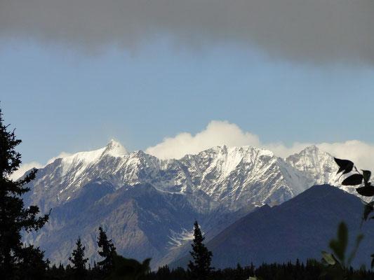 Endlich sehen wir ihn, den Mt. McKinley (6'194 m.ü.M.)