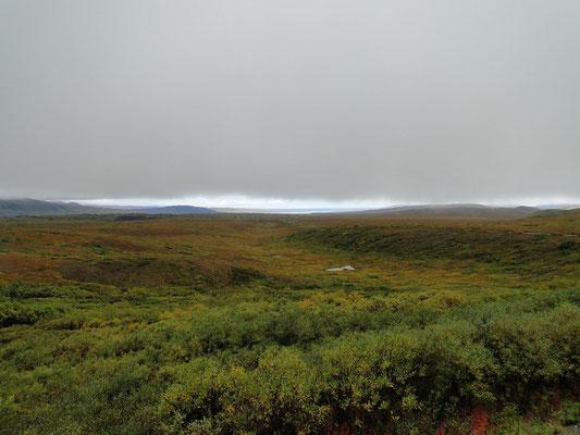 schöne Tundralandschaft