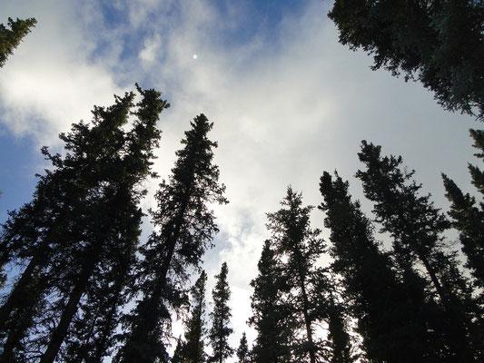 Kanada halt ... Bäume und Schönwetter