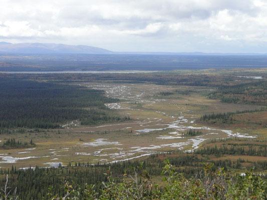 Landschaft der Alaska Range