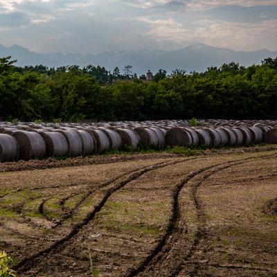 La raccolta del fieno abbonda in pianura