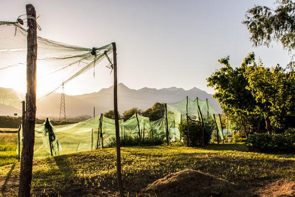 Il torrente ha predisposto un buon terreno anche per gli orti privati