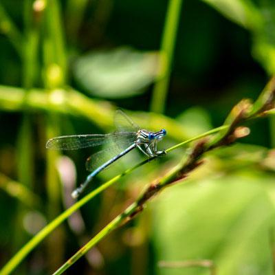 Libellule e moltissimi altri insetti popolano questo ambiente