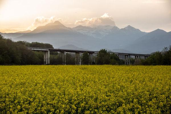 Campi coltivati a colza attorno al ponte della tangenziale di Chiavazza