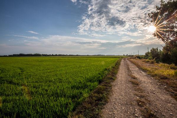Le strade sterrate ad uso esclusivamente agricolo fanno parte dei panorami lungo il Cervo