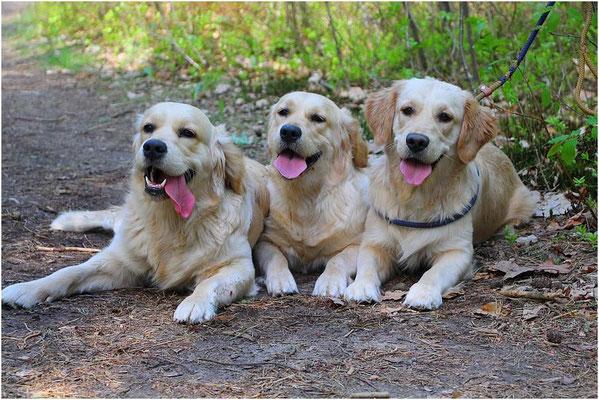 Bink, Macy & Collin