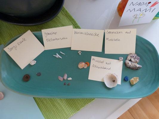 und Korallen, Schnecken, Knöpfen und anderen Dingen die man am Strand findet