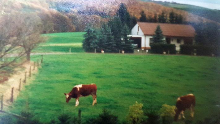 Wiese 1987 - jetzt Haus Lamberty