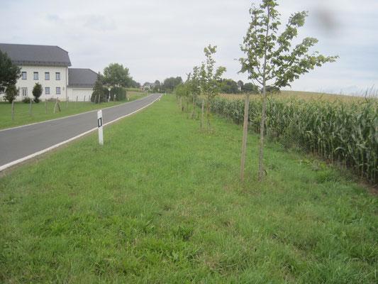 von Grimbach nach Ammeldingen September 2015