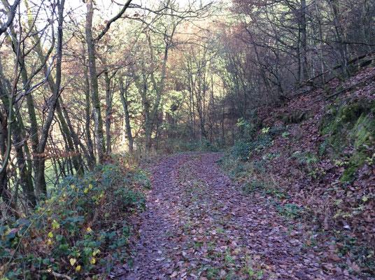 Waldweg bei Ammeldingen