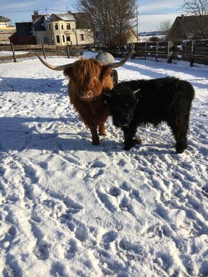 Susi und Tobi im Schnee 2017