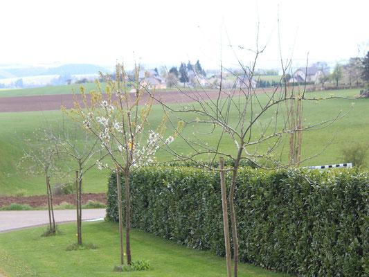 Obstbäume-Blick nach Grimbach 2017