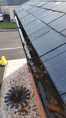 We clear gutters - Exeter window cleaning