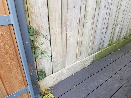 Green fencing cleaning test patch in Exeter