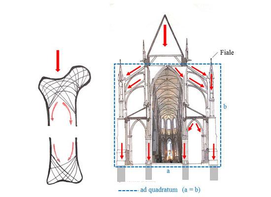 vergleich Kraftlinien: Knochen und Gotik;  © Grafik und Foto Dr. Peter Diziol