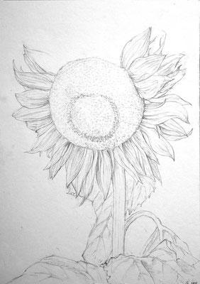 """""""Der Sonnenblum"""", Zeichnung 2018"""