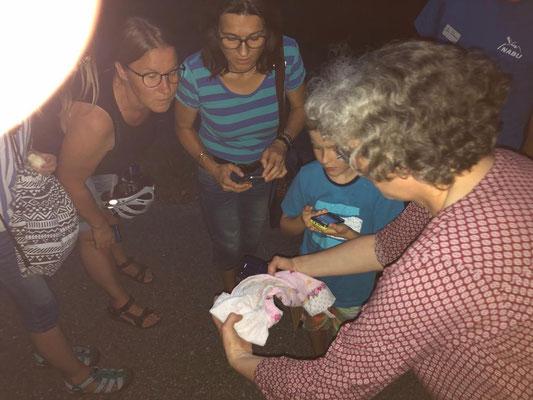 Und noch ein Highlight - die Auswilderung der jungen Zwergfledermaus