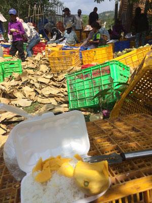 Mittagessen beim Arbeiten auf der Mangofarm - Reis mit frisch geernteter Mango