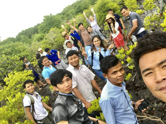Mangroven pflanzen in Koh Kong
