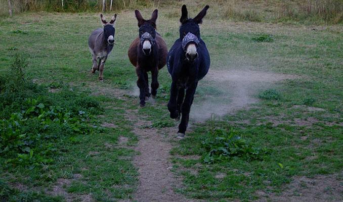 Le Chaim, Ephraim und Samuel sind schon fast bei mir, hier sieht man Léon, gefolgt von Gismo und Abraham