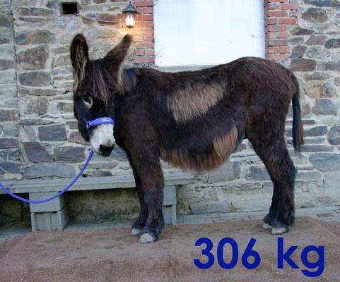 Gismo - 306 kg
