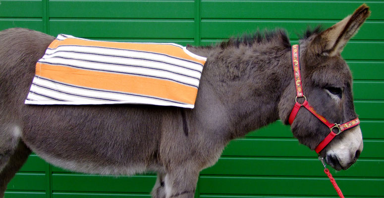Beispiel: Esel mit Stockmaß 121 cm Größe S