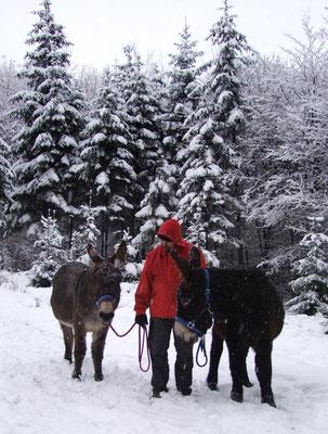 Gregor mit Abraham und Gismo im tiefen Wald.