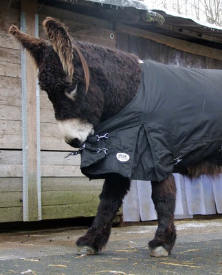 Gismo prüft die neue Decke auf seine Biss- bzw. Reißfestigkeit - sie hat bestanden.