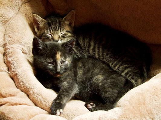 Rebecca und Habakuk - eine Geschwisterliebe.