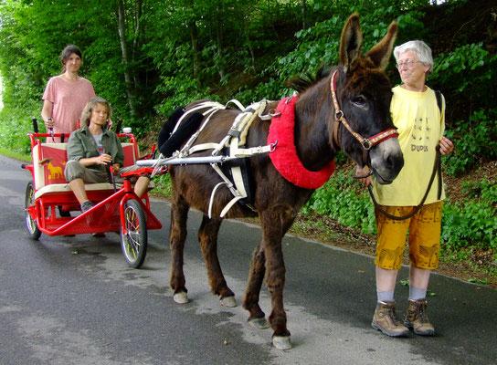 Le Chaim hat ein Pferd auf einer Koppel entdeckt.