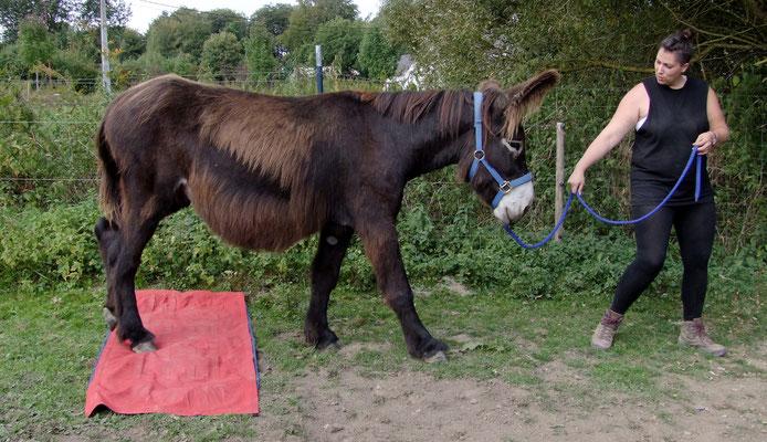Esel-Projekt Teilnehmerin mit Gismo