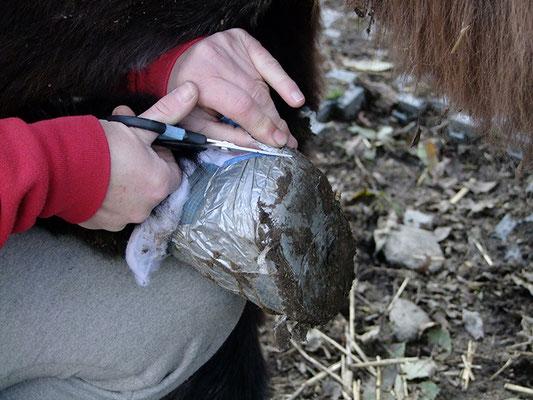 Verband einschneiden - ich arbeite mich nur durch die erste Verbandsschicht, damit ich den Esel nicht ins Fleisch schneide