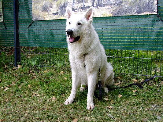 """Der """"Wolf"""" hat alles im Blick. Er hat uns sehr souverän den ganzen Tag begleitet."""