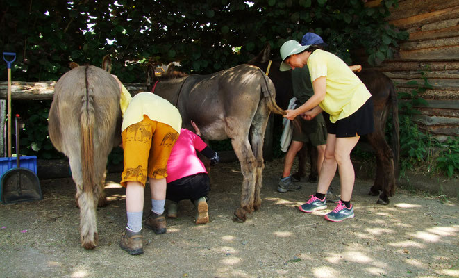 Der nächste Morgen - die Esel werden herausgeputzt.