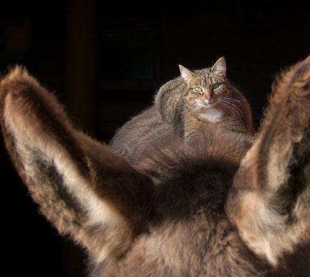 Katze Lisenka nimmt ein Sonnenbad auf Ephraim.