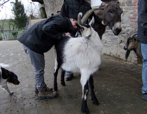 Bock Jakob verteilt Küsschen.