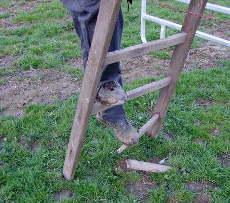 Zum Glück brach das unterste Holz, so dass keiner wirklich zu Schaden gekommen ist.