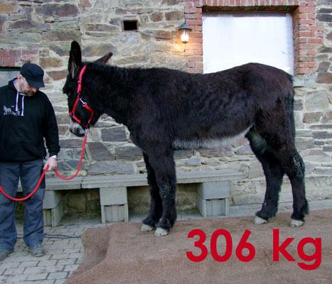 Léon - 306 kg