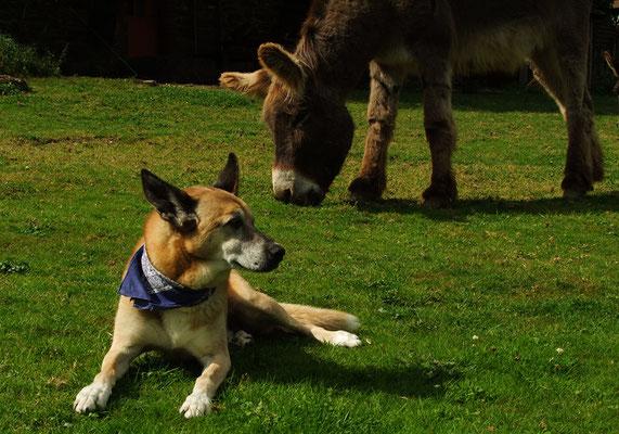 Hund Schmock und Abraham.