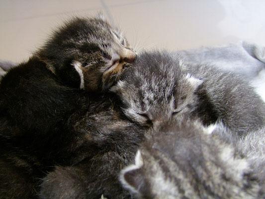 Zusammen kuscheln hält warm.