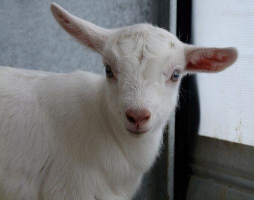 Nurit übt schon einmal die Ohren wie ein Esel zu bewegen ...