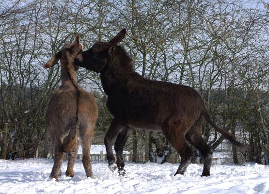 Ephraim und Le Chaim spielen miteinander