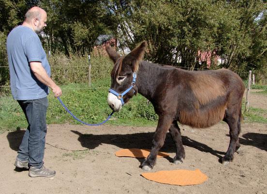 Esel-Projekt Teilnehmer mit Gismo