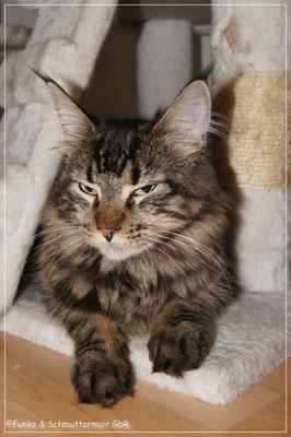 Ilvy, genannt Josie