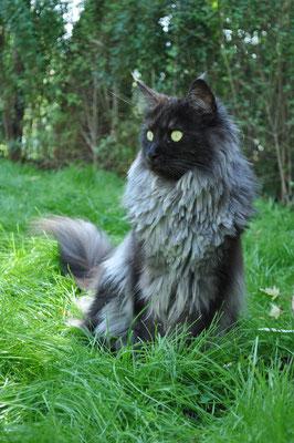 Amadeus ist gerne im katzensicheren Garten