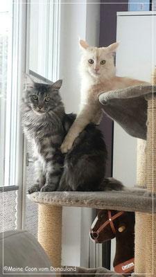Janosch und Merlin