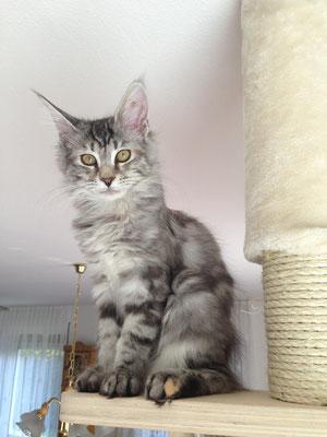Kiwi, eine Tochter von Gioia