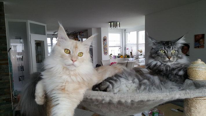 Merlin und Janosch auf dem Beobachtungsposten