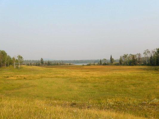 Green Lake, da lief eben ein Schwarzbär über die Wiese