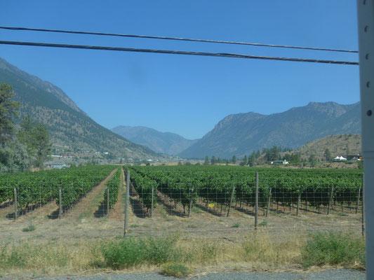 Weinplantagen